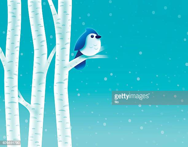 Birch Tree Winter Bird