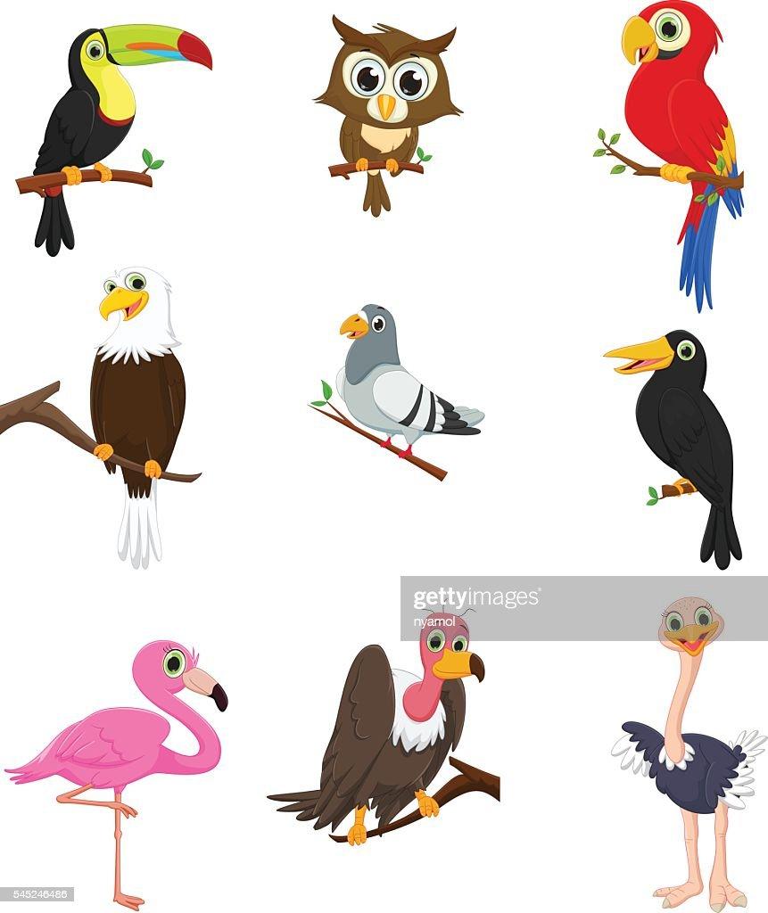 Bird cartoon collection