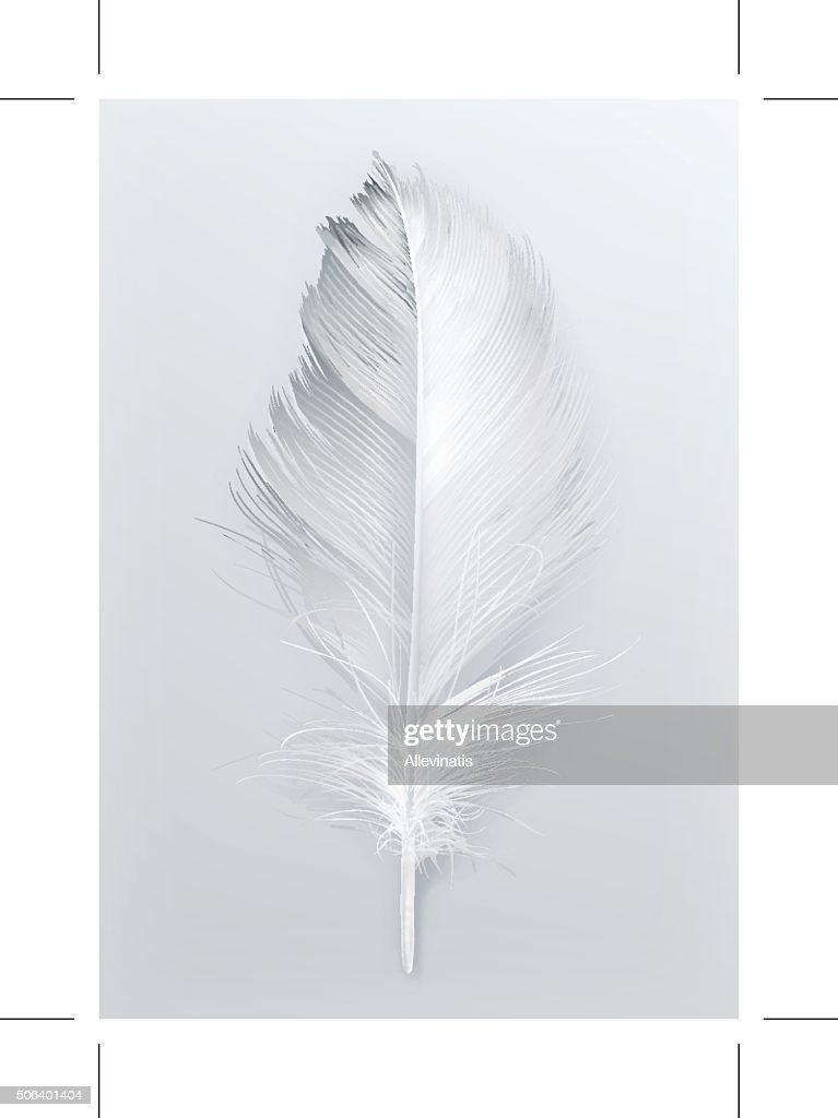 Bird feather vector icon