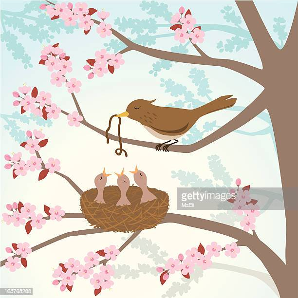Bird feeding chicks in a cherry tree