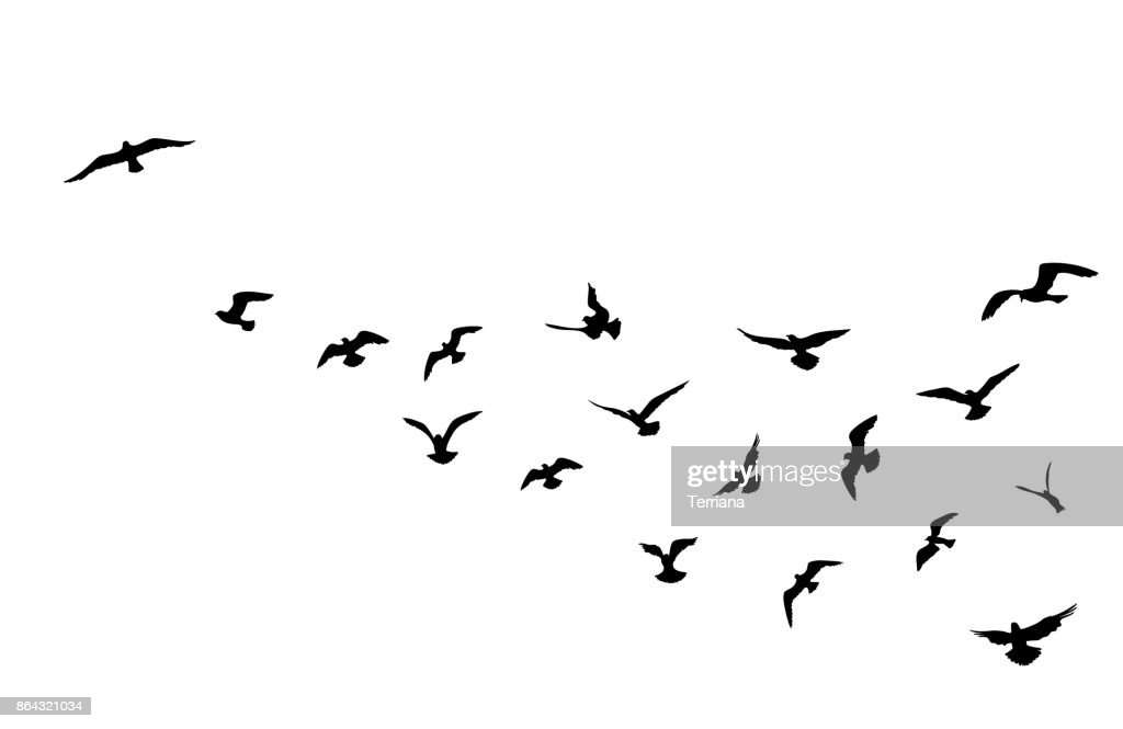 Bird flock flying over blue sky background. Animal wildlife.