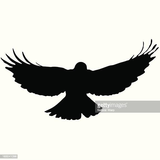 Bird Flying Silhouette 10