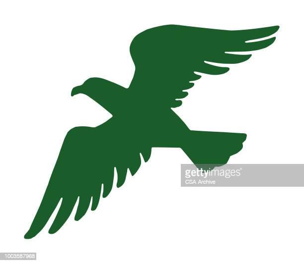 bird flying - bird of prey stock illustrations, clip art, cartoons, & icons