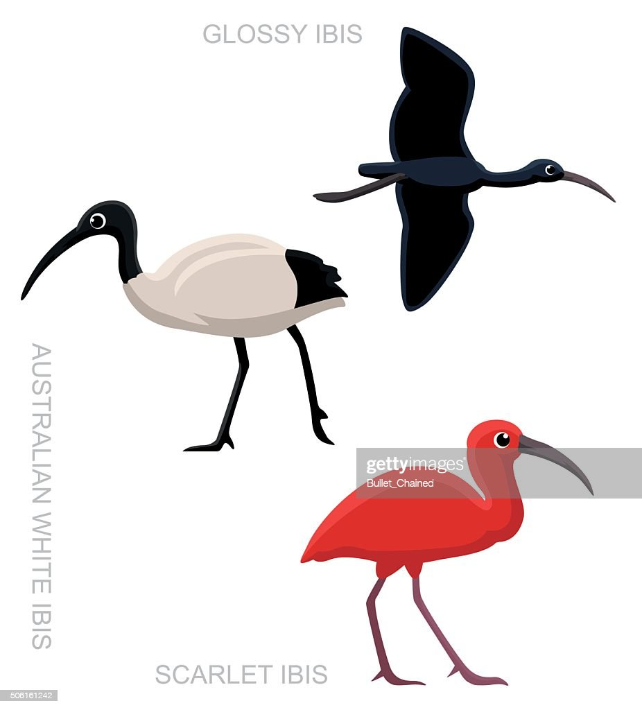 Bird Ibis Set Cartoon Vector Illustration