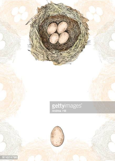 bird nest vector design template with copy space - animal egg stock illustrations, clip art, cartoons, & icons