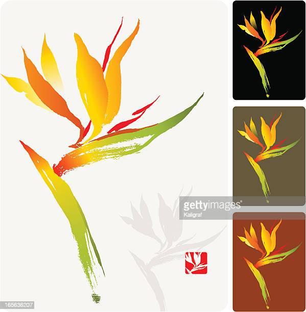 bird of paradise, a tropical flower - portulaca stock illustrations, clip art, cartoons, & icons