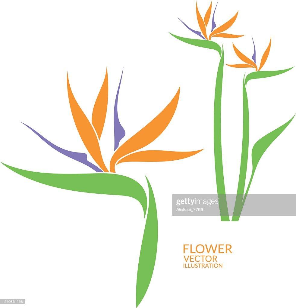 Bird of paradise. Tropical flower