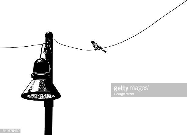 bird on a wire chirping. - telephone line stock illustrations, clip art, cartoons, & icons