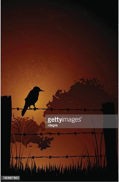 Pájaro por alambradas de púas