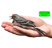 Bird on palm of hand. Isolated on white background. Vector illustration.