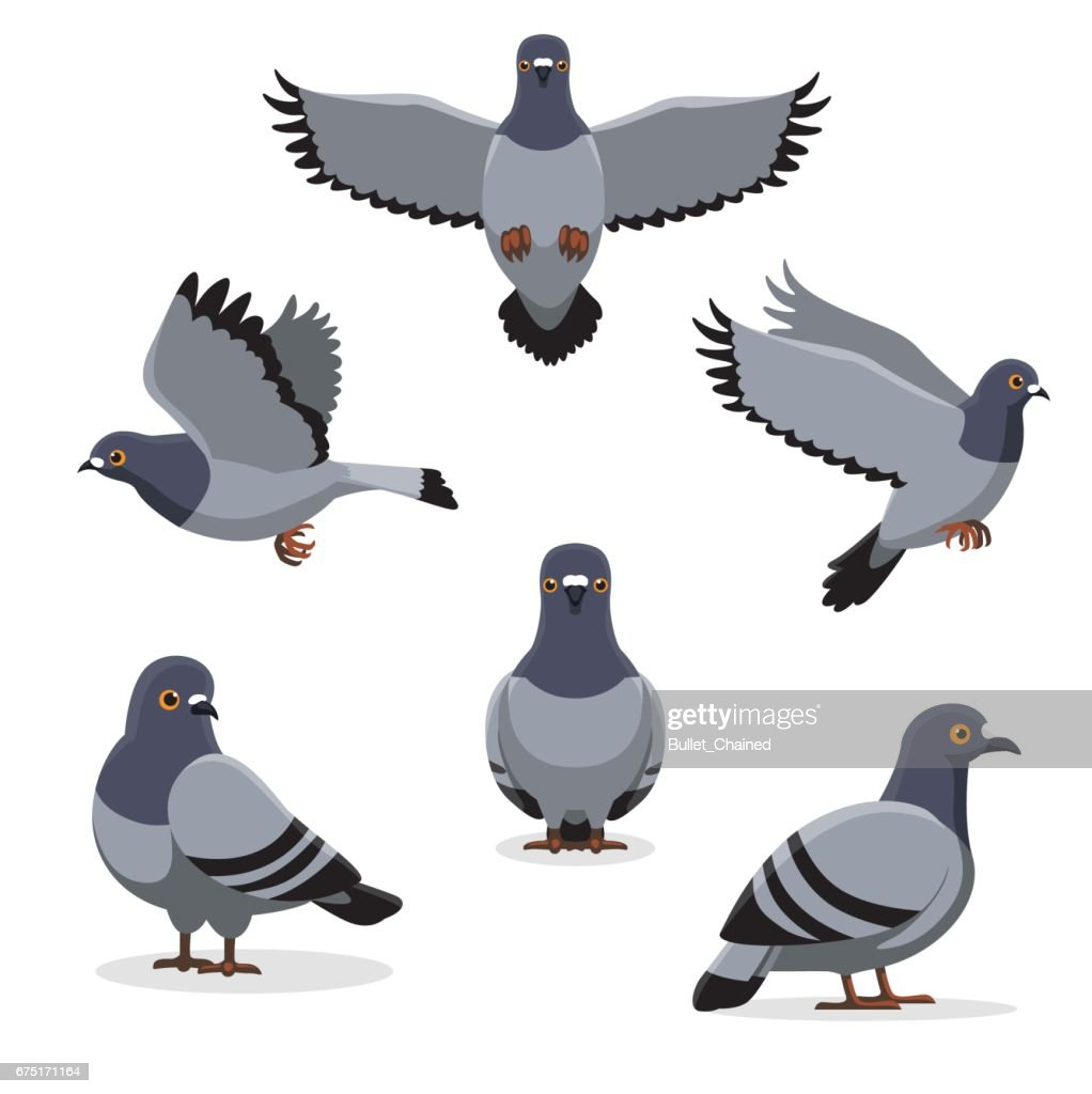 Bird Pigeon Poses Cartoon Vector Illustration