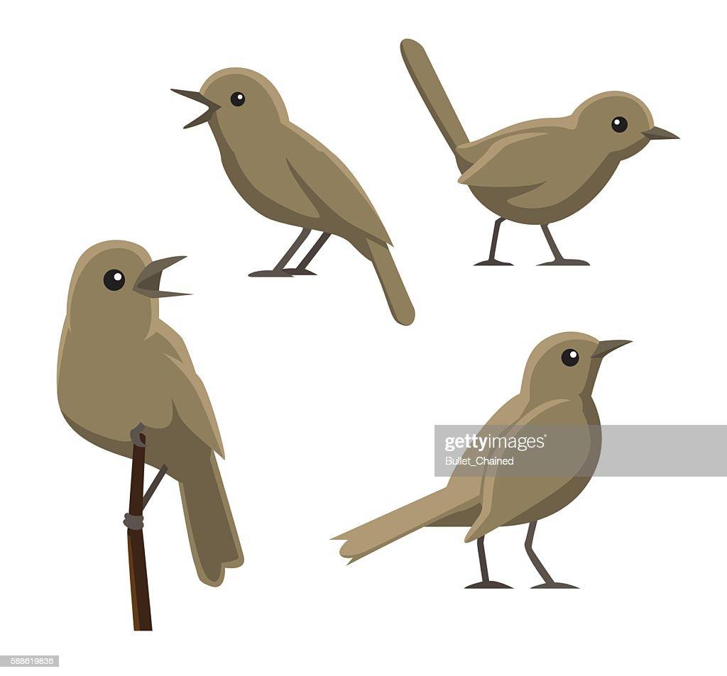 Bird Poses Nightingale Vector Illustration