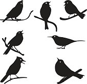 Bird Silhouettes, bird on branch, vector collection, isolated