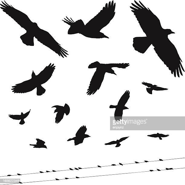 bird silhouettes - telephone line stock illustrations, clip art, cartoons, & icons