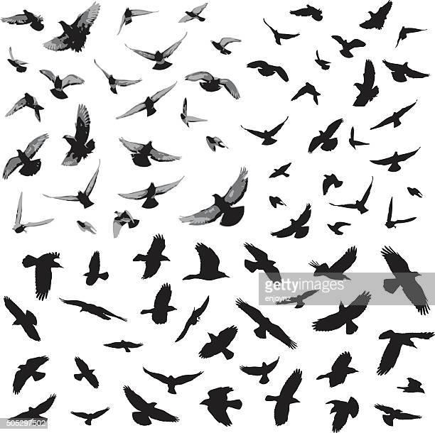 bird silhouettes - hawk bird stock illustrations, clip art, cartoons, & icons