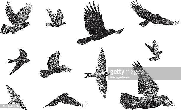 bird silhouettes - eagle bird stock illustrations, clip art, cartoons, & icons