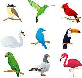 Bird species collection 1