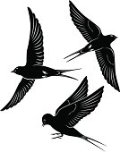 bird swallow