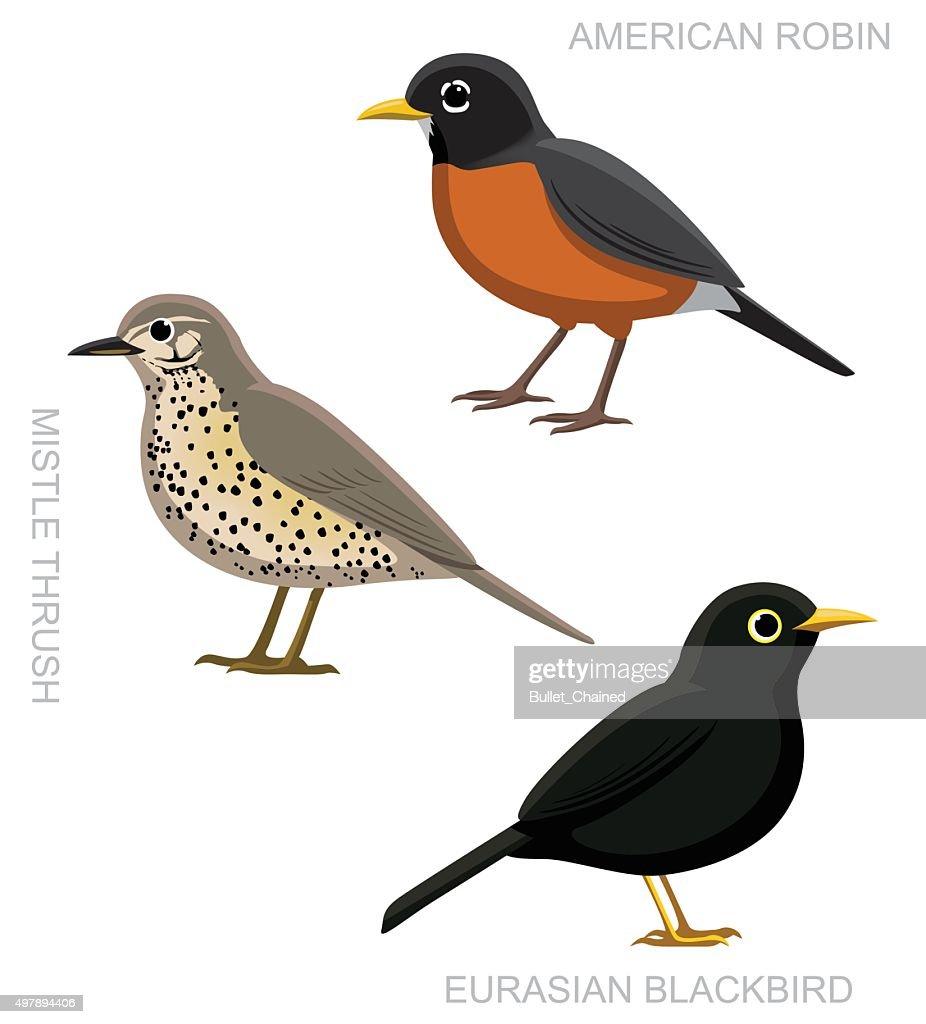Bird True Thrush Set Cartoon Vector Illustration