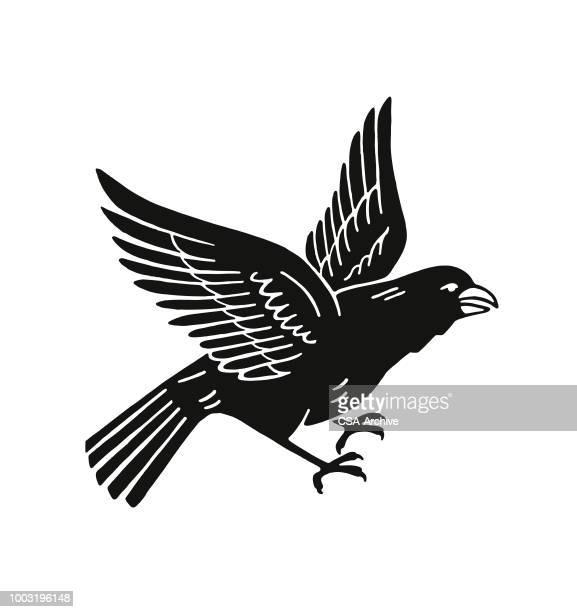bird - crow bird stock illustrations