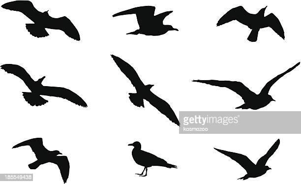 bird - seagull stock illustrations