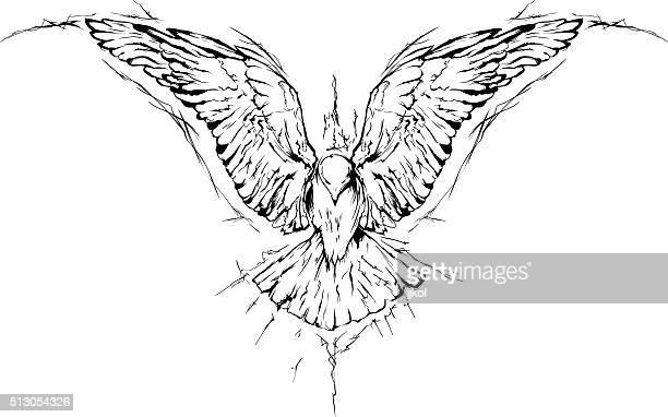 bird - hawk bird stock illustrations, clip art, cartoons, & icons