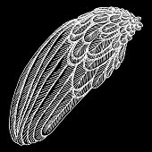 Bird wing. Hand drawn etched woodcut vintage style wing. Vector.