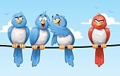 Birds And Prejudice