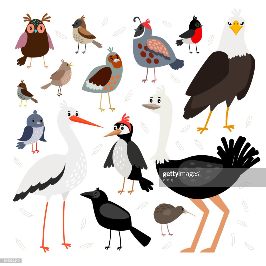 Birds collection isolated on white background