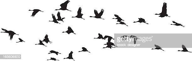 Birds Group :: Balck and white
