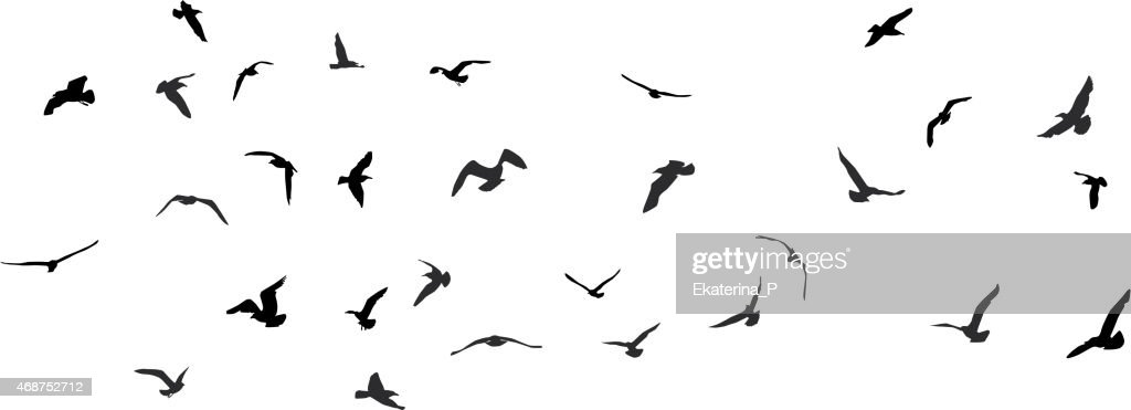 Birds, gulls, black silhouette on white background. Vector
