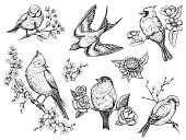 Birds hand drawn illuatrations in vintage style with spring blossom flowers.