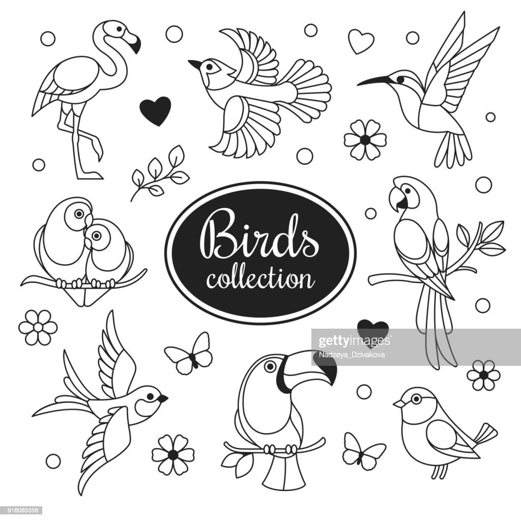 Birds icons collection.