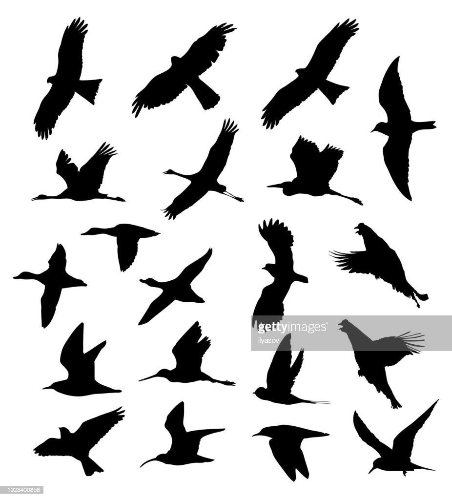 Birds in the flight set silhouettes