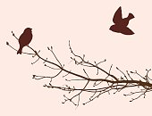 birds in the spring season
