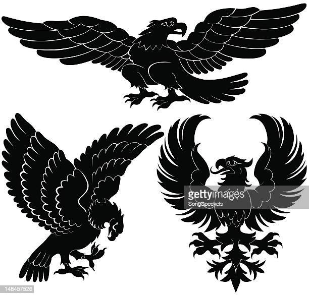 birds of prey heraldry designs - talon stock illustrations