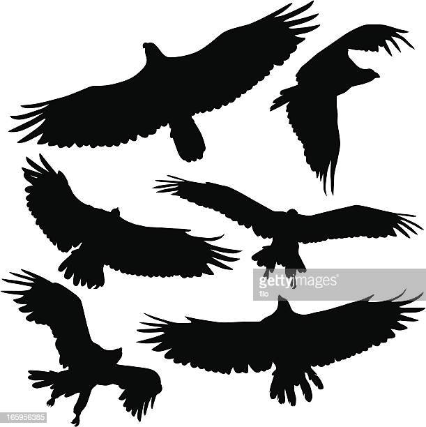 birds of prey - spread wings stock illustrations
