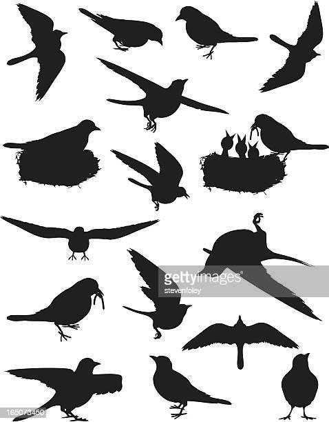 ilustraciones, imágenes clip art, dibujos animados e iconos de stock de aves de resorte - pájaro