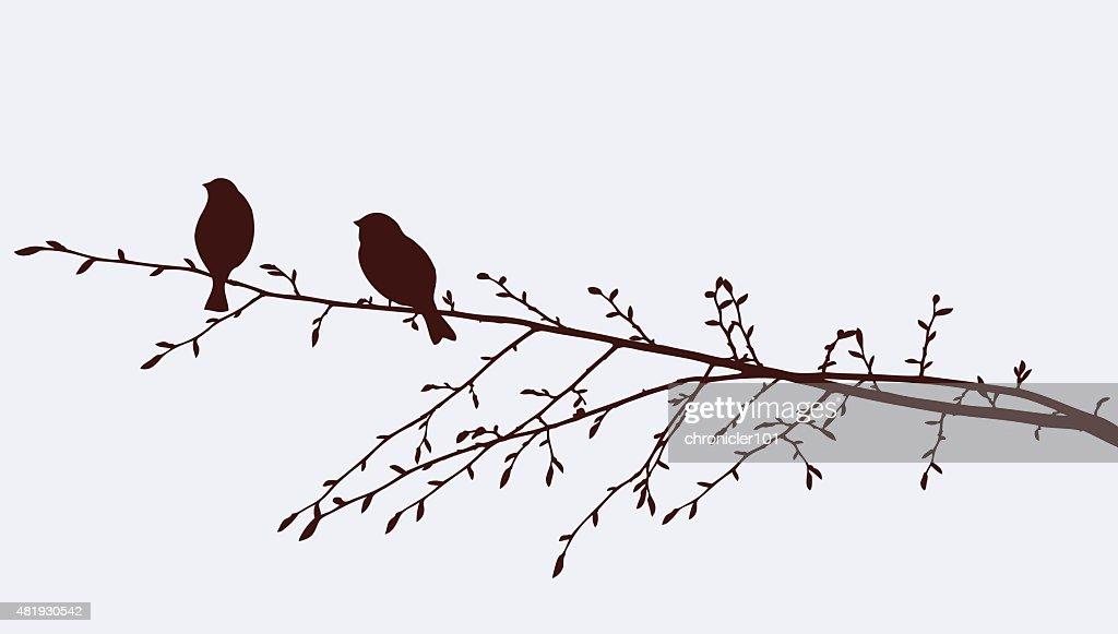 birds on a sprig