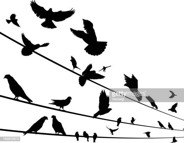 Pájaros en un cable