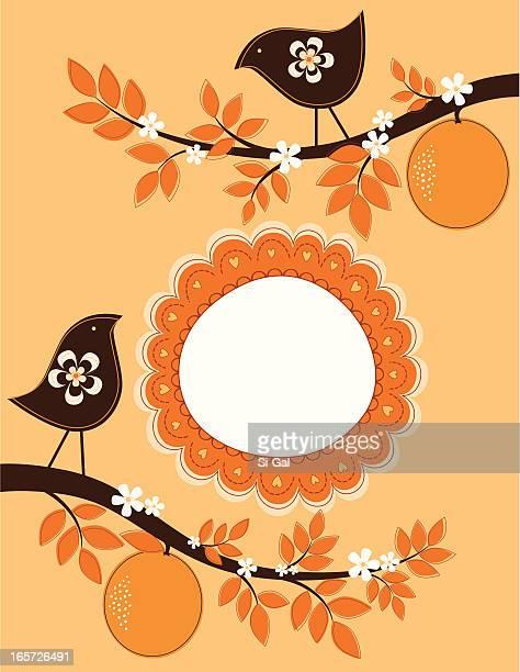 ilustrações de stock, clip art, desenhos animados e ícones de pássaros em uma laranjeira - laranjeira