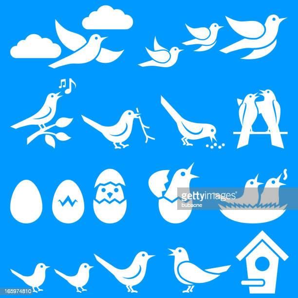 Birds on Blue Summer Background