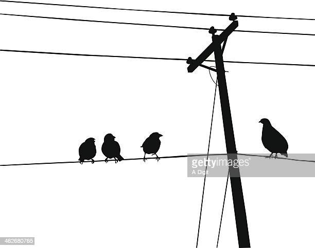 birds on line - telephone line stock illustrations, clip art, cartoons, & icons