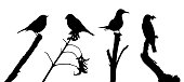 Birds on the branch silhouette set in vector