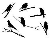 Birds on the branch silhouette set