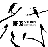 Birds on the branch silhouettes collection