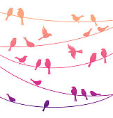 Birds on the lines. Vector decorative silhouettes