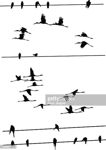 birds on wires - flamingo stock illustrations, clip art, cartoons, & icons