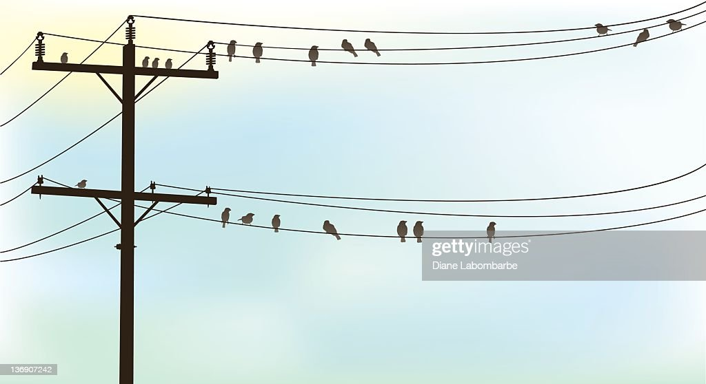 Birds Perched On A Old Telephone Wire Pastel Sky Background Vector ...