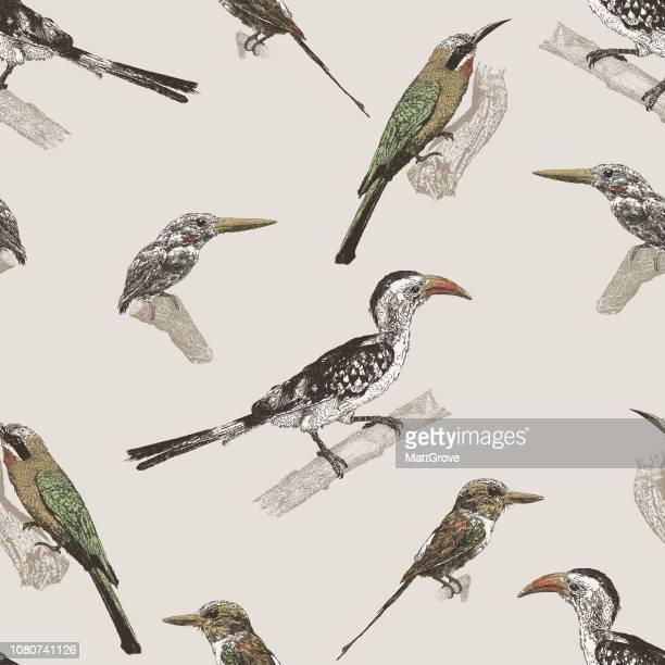 Aves repetición patrón